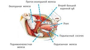 Воспаление желез в околоушной области