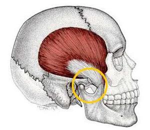 Болит скула и челюсть возле уха справа или слева, больно жевать, отдает в ухо: причины, первая помощь и последующая терапия в домашних условиях, болеть челюсть возле ухо справа один сторона при жевание слева