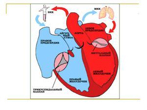 Пороки сердечно-сосудистой системы
