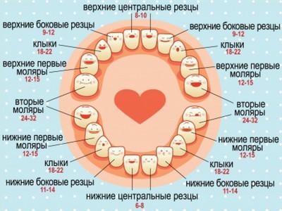 Когда прорезываются зубки