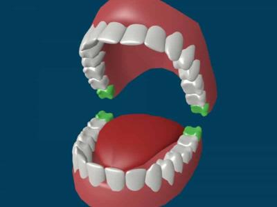 Сколько у человека коренных и молочных зубов, зубов мудрости, сколько раз меняются зубы